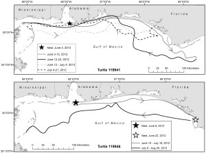 "Loggerhead ""exchanges"" between study sites. Tracks of satellite-tagged adult female loggerheads (Caretta caretta) 119941 and 119946 during the inter-nesting period in 2012 (A); tracks of satellite-tagged adult female loggerheads 108172 (2011) and 119940 (2012) during the inter-nesting period (B). doi:10.1371/journal.pone.0066921.g002"